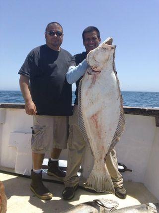 67.3 halibut