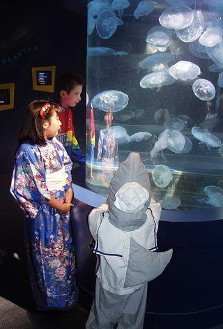 ScariumofPacific - credit Aquarium of Pacific